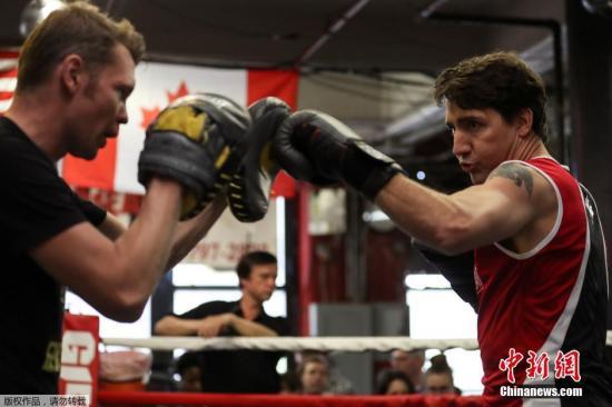 当地时间2016年4月21日,美国纽约,加拿大总理特鲁多在拳击馆展开训练。
