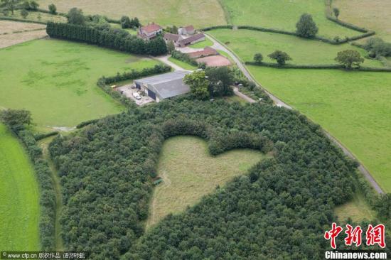 资料图:2012年7月16日消息,英国南格洛斯牻的农场主,70岁的温斯顿·豪斯便与儿子一起在自家农场种下了六千棵橡树,以纪念15年前因心脏病发去世的妻子。图片来源:CFP视觉中国