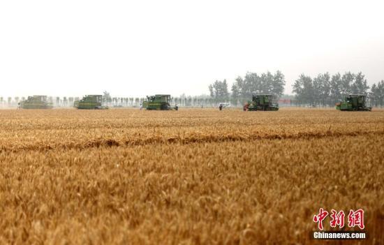 5月25日,麦浪滚滚,在河南唐河县16万亩的永久性高标准粮田示范方里,40余台农业机械设备集体亮相,拉开三夏小麦收割会战的序幕。收割机进行机械化收割,播种机进行粉碎、灭茬、开沟、施肥、播种等多道工序,植保无人机进行喷洒秸秆腐熟剂,真正实现了小麦收割、施肥、播种工序的农业生产机械化。中新社记者 王中举 摄