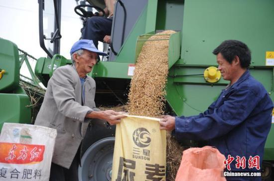 资料图:2016年6月3日,爱心公益收割队免费为困难农户抢收小麦,确保夏粮颗粒归仓。<a target='_blank' href='http://www.chinanews.com/'>中新社</a>记者 张娅子 摄