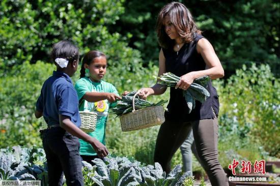 """本地时刻2016年6月6日,美国华盛顿,美国榜首夫人米歇尔-奥巴马率领门生采摘白宫菜园里的蔬菜,一同吃午饭,并大秀秀肌肉转变""""女男人""""。"""
