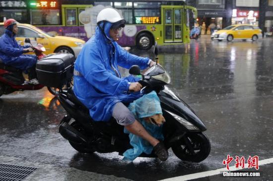 6月14日,台北市南京东路上,骑摩托车出走的民多给狗穿上雨衣。连日来,台湾多地遭遇豪雨。台农业部分14日外示,6月豪雨已累计造成全台农业产物及民间设施亏损推想达1188万元新台币。中新社记者 陈幼愿 摄