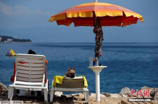 当地时间2016年7月12日,克罗地亚茨里克韦尼察,克罗地亚第一家专门为宠物狗设计的沙滩酒吧在营业,这家酒吧为宠物狗提供特别准备的冰激凌、狗啤酒和小吃,使狗狗和主人可以在海滩上同享惬意时刻。