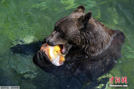 资料图:黑熊。