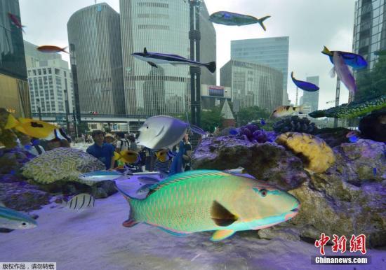 资料图:来自日本冲绳岛的各式鱼类。