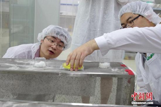 7月22日,实验室科技人员向媒体展示蚊子吸血过程。在中山大学-密歇根州立大学热带病虫媒控制联合研究中心,实验室科技人员向蚊子注射派毕梯斯沃巴契亚体细菌,阻止蚊子繁殖,从而抑制登革热、寨卡等病毒的传播。 <a target='_blank' href='http://www.chinanews.com/'>中新社</a>记者 黄卓贤 摄