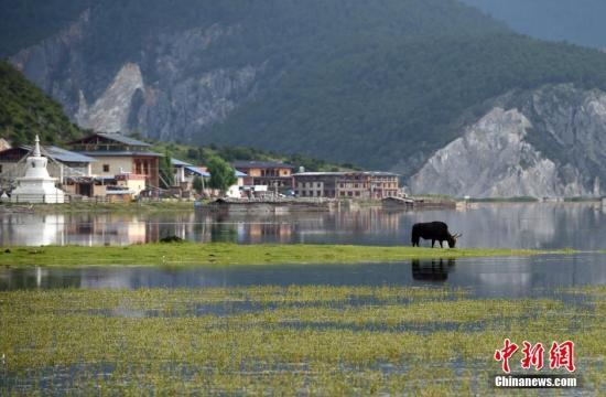 云南旅游市场整治呈压倒性态势 旅游人次及年收入双增长