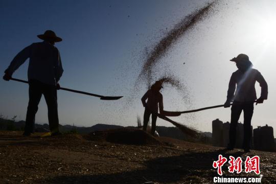 """资料图:农民摞麦、碾场、晒粮,用传统的方式让""""颗粒归仓""""。杨兆康 摄"""