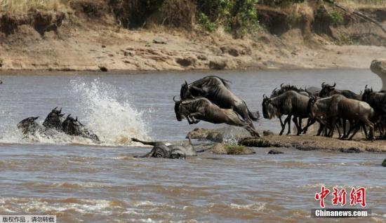 津巴布韦将向莫桑比克迁移2000头野生动物