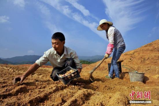 农业部详解土地制度改革:与联产承包有四方面区别