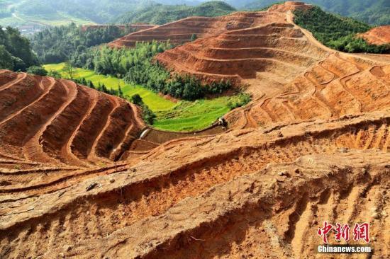 资料图:江西省万载县白水乡一处山村梯田里,村民们忙着种植百合。 邓龙华 摄