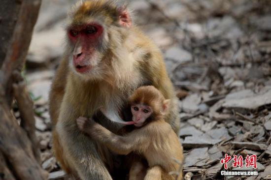 Profile: Monkey. Wang Zhongjue