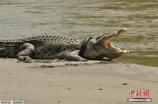 美国佛州发生鳄鱼伤人事件 1名女