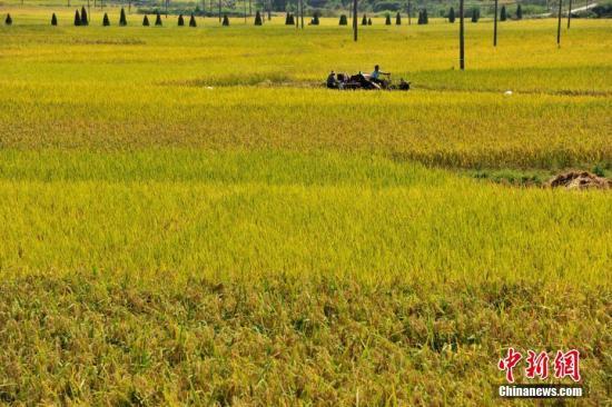 发改委:今年继续在稻谷主产区实行最低收购价政策