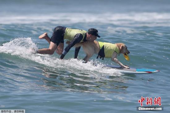 资料图片:狗狗冲浪比赛。