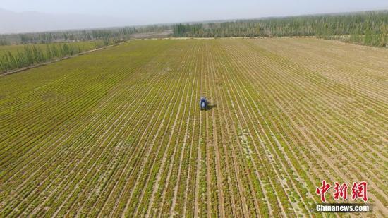 资料图:位于新疆博斯腾湖畔的博湖县的农牧民正在秋收。年磊 摄