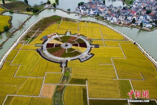 资料图:2016年11月,空中俯拍南京郊外的成熟稻田和民居。 中新社记者 泱波 摄