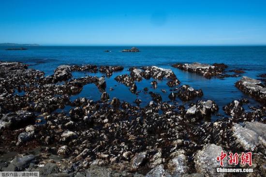 凯库推海岸线本来被海火吞没的处所如今暴露出去,有些处所抬降达4米。