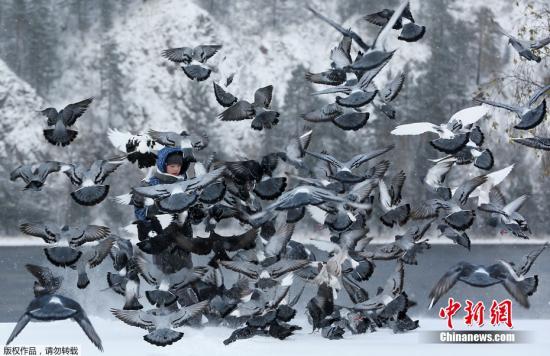 资料图:一群鸽子。