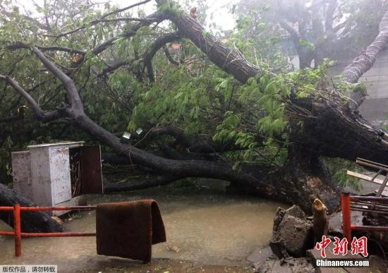 """当地时间12月12日,印度钦奈,飓风""""瓦达""""(VARDAH)登陆印度。"""