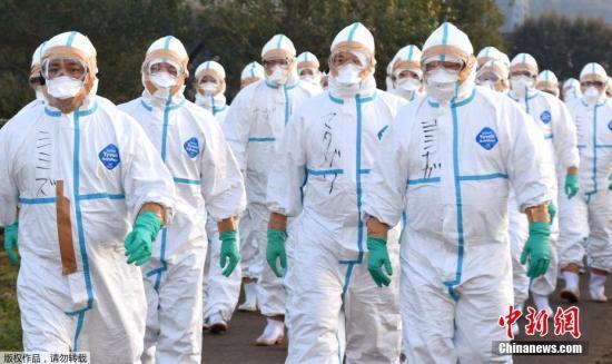 资料图:处理禽流感疫情的日本防疫人员。