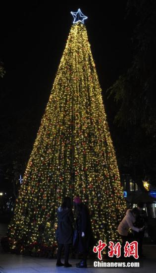 资料图:圣诞树。中新社记者 张茵 摄