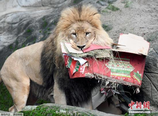 资料图:狮子。