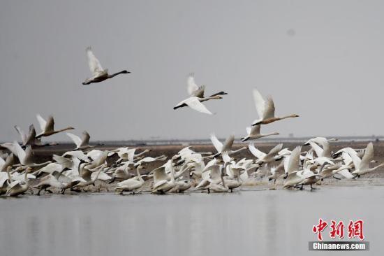 资料图:在江西鄱阳县白沙洲自然保护区,众鸟翔集。 鲍赣生 摄