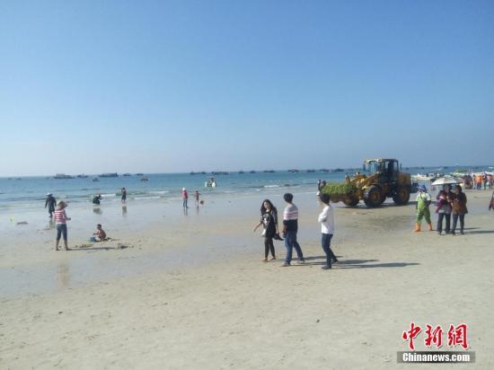 """进入1月,中国知名旅游景点广西北海银滩再度遭受绿藻侵袭,变成""""绿滩""""。为及时将绿藻和各种海洋垃圾清理运出景区,景区管理机构1日至3日出动大量环卫人员,共清理约81吨绿藻。预计4日至5日海藻仍会出现在退潮后的沙滩上,当地将采取有效措施应对。据专家介绍,大量绿藻出现与人类过度使用含磷含氮用品有关。向明 摄"""