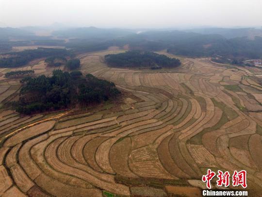 资料图:土地。 蒋雪林 摄