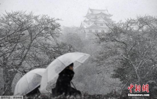 当地时间1月14日,日本京都彦根城,人们在大雪中撑伞出行。日本气象厅警告,日本海沿岸地区暴风雪和严重积雪会持续到16日。全日空和日本航空公司已取消至少130个航班,东海道新干线和山阳新干线服务出现延误。