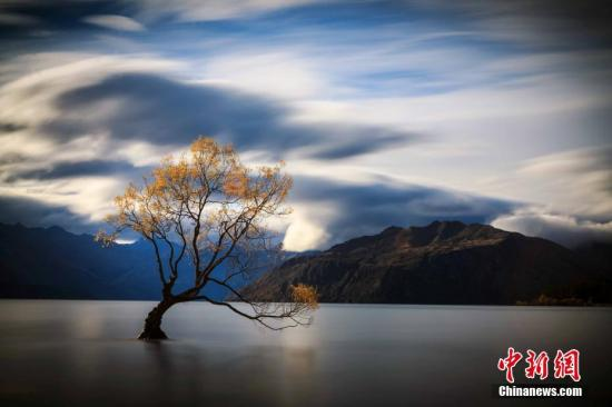 资料图片:瓦纳卡湖Lake Wanaka,新西兰南岛中西部湖泊,为新西兰第四大湖。湖里的树看似孤独,却吸引了全世界人去围观。<a target='_blank' href='http://www-chinanews-com.johnchem.com/'>中新社</a>发 张钟明 摄