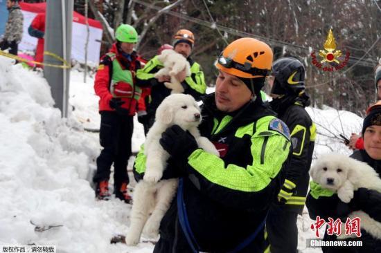 当地时间1月23日,意大利救援人员在被雪掩埋的酒店附近找到三只被埋的狗宝宝。三个呆萌小家伙的获救让工作人员喜出望外,热情地对它们又抱又亲。意大利中部的一处滑雪度假酒店当地时间1月18日遭到雪崩掩埋,造成宾馆内超30人失踪。