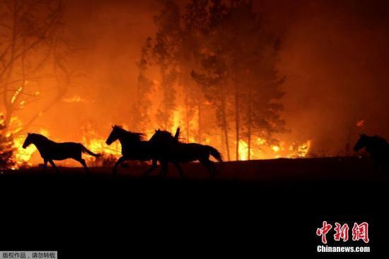 智利大面积林火延烧 致11人死近1500所房屋烧毁 江陵肃背景