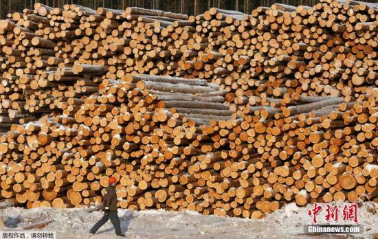 资料图:木材。