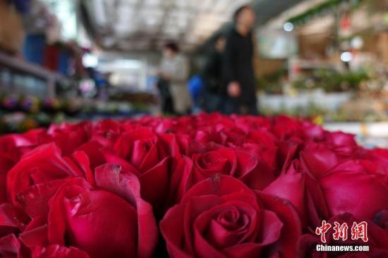 2月13日,北京一花卉市场内,花商备足了玫瑰花,精细包装,抢占情人节商机。 中新社记者 杨可佳 摄