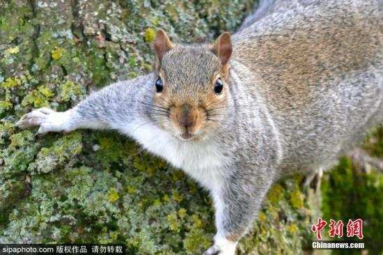 资料图:松鼠。图片来源:Sinaphoto版权作品 禁止转载