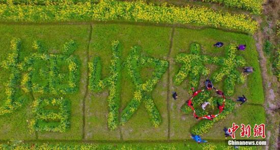 """2月14日,广西柳州市融安县大良镇和南村的油菜花花开正盛。在农业部门的指导下,当地农民在油菜花田里种出""""稻油油增收梦""""字样,吸引了不少游客前来旅游观光。该县摸索出一套""""稻油油""""(水稻+油葵+油菜)模式,在提高农田的使用率的同时,发展生态农业观光旅游,促进农民增收。谭凯兴 摄"""