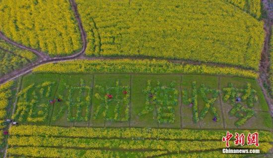 资料图 2月14日,广西柳州市融安县大良镇和南村的油菜花花开正盛。谭凯兴 摄