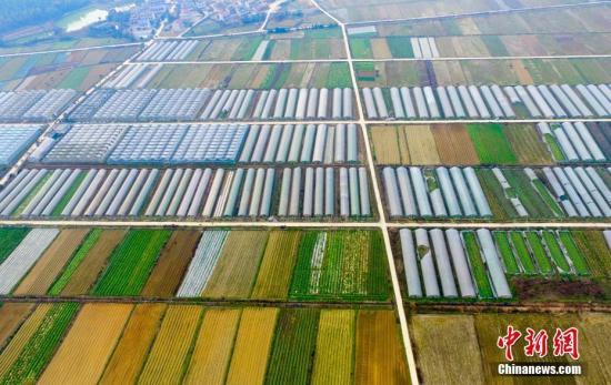 资料图:江西新余一家有机蔬菜种植园。 赵春亮 摄