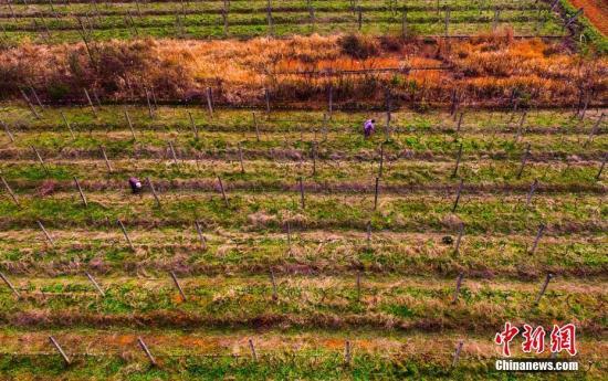 保监会:中国农业保险业务规模位居全球第二