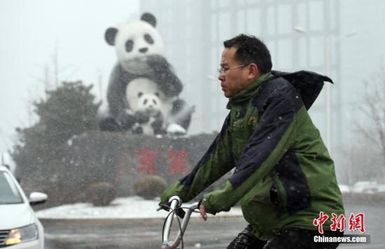 2月21日,北京迎来降雪,一名男子在飞雪中骑自行车经过东北部望京地区标志性的熊猫雕塑。中新社记者 侯宇 摄