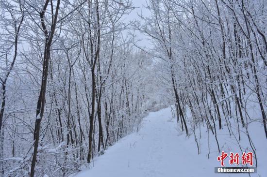 资料图:2月22日,甘肃天水市出现入冬以来最大地降雪天气。 赵安生 摄
