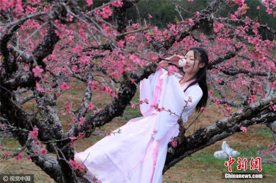 2月25日,广东连州2017年桃花节开幕,身穿古装的窈窕少女,像古人一样踏青赏花、吟诗作对。在桃花林里摆下桌子,倒满桃花酒,一边品尝桃花酒,一边玩飞花令,输了的要喝酒。图片来源:视觉中国