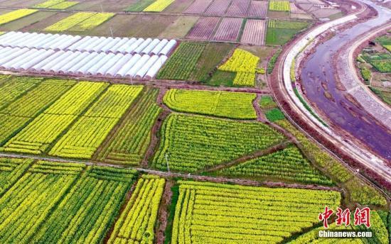 2月28日,在江西省万载县白良镇白良村,数十亩连片的农田中金黄色的油菜花盛放,吸引众多游客前来欣赏这片美景。图为空中俯看油菜花海。邓龙华 摄