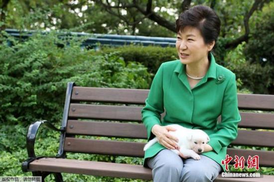 """朴槿惠在青瓦台养了9只韩国名犬珍岛狗。但在被弹劾后,12日晚间搬到首尔三成洞私宅时,将狗全部遗弃在青瓦台,违反了""""动物保护法""""。图为朴槿惠宠物狗资料图。文字来源:环球网文字来源:环球网"""