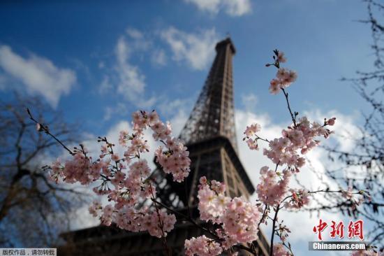 当地时间3月14日,法国巴黎,埃菲尔铁塔下花朵盛开,美不胜收。