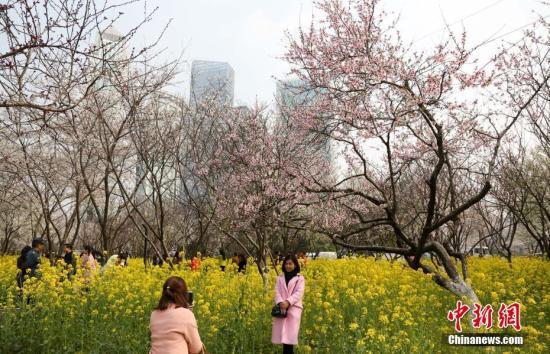 3月16日,在武汉汉口西北湖广场,市民们花海中驻足留影。记者 张畅 摄
