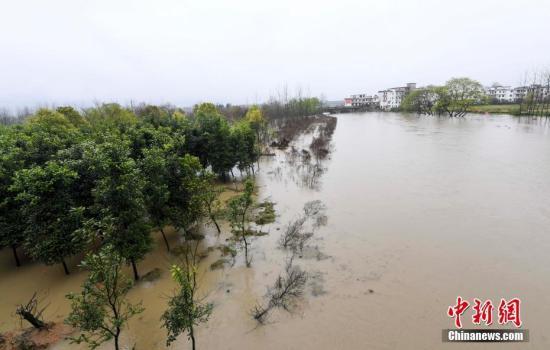 据江西省水利部门水雨情监测数据,3月21日17时-22日17时,江西全省有57个县(区、市)降下暴雨。3月22日,连日降雨导致该省新余市孔目江水位上涨,孔目江流经该市观巢镇、欧里镇境内沿岸部分农林作物受影响。当地水利、农林部门针对降雨形势正积极采取措施,减少损失。 赵春亮 摄