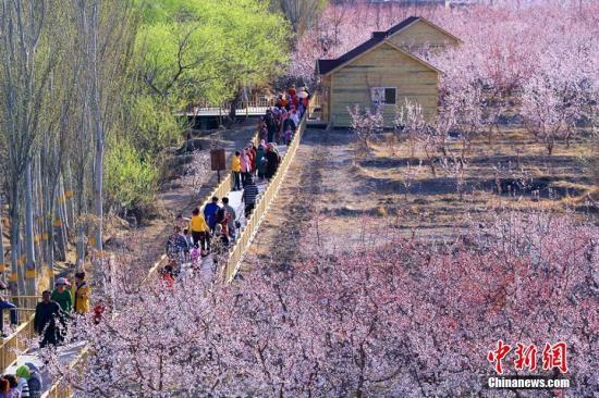 资料图:新疆托克逊杏花盛开。 李靖海 摄